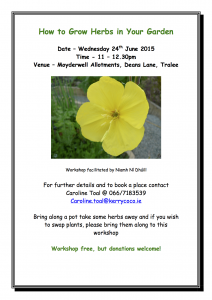 allotment herb workshop June 2015